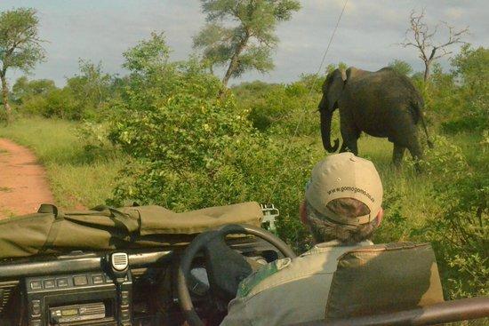 Gomo Gomo Game Lodge: Safari