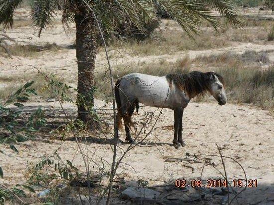 Joya Paradise : or hotel , maman je peu faire du cheval??