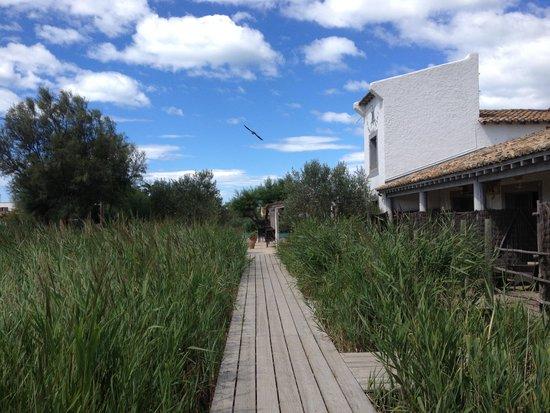 Hotel Les Arnelles : Ponton pour accéder aux chambres