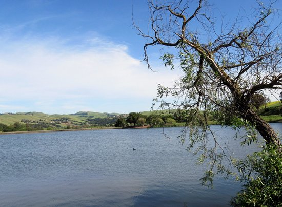Ed Levin County Park, Milpitas, Ca