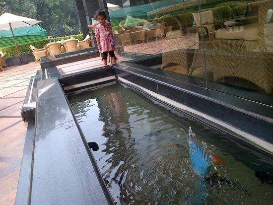 Shangri-La's Eros Hotel: aquarium