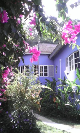 The Blue House Boutique Bed & Breakfast: like a dream