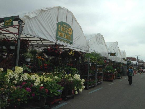 Marché Jean-Talon (Jean-Talon Market) : Fresh Flowers Tent