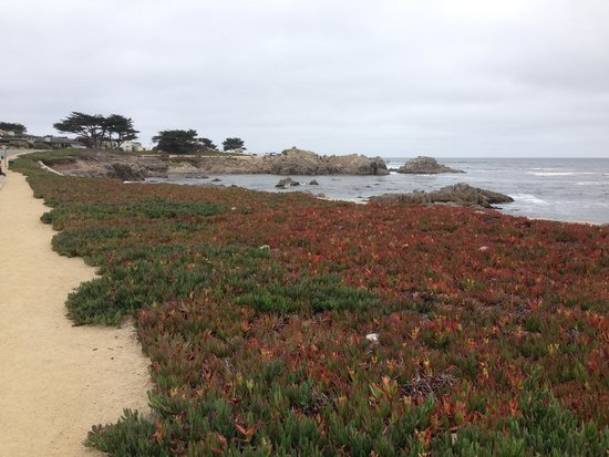Pacific Grove Oceanview Boulevard: The view