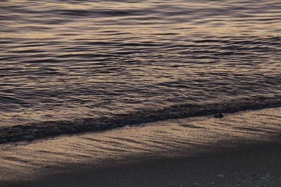 Sugar Beach Mauritius: Sunset on the water!