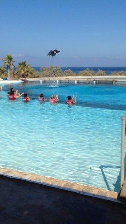 Mediterraneo Marine Park: Dolphin in the air