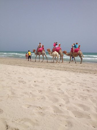 Aldiana Djerba Atlantide: Camels on the stunning beach
