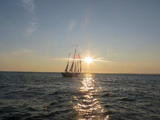 The Black Dog Tall Ships: Saling