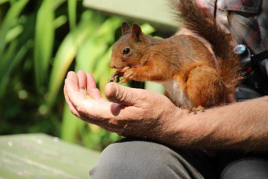 Musée de plein air de Skansen : friendly skansen squirrel