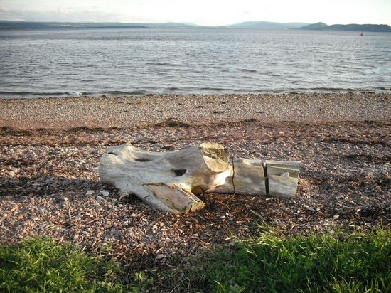 Chanonry Point : Local beach
