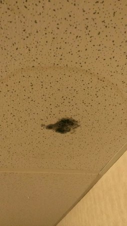 Days Inn & Suites Richfield : Mold on the ceiling in the hallway