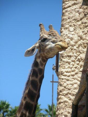Selwo Aventura: girafe