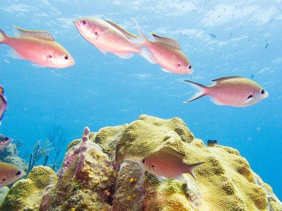 Sunset Hotel : 5 meters reef
