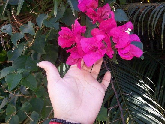 Secrets St. James Montego Bay: Gorgeous flowers