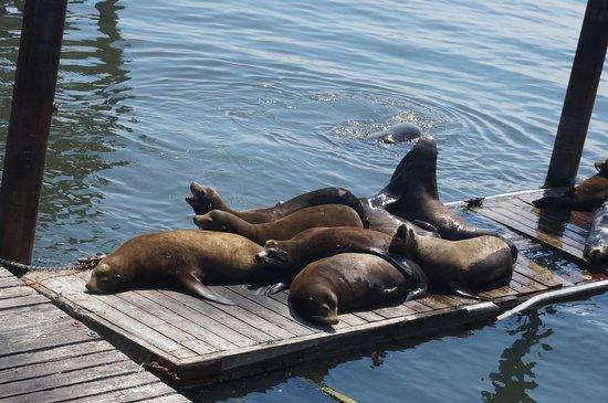 Mo's Original Restaurant: The most sea lions city