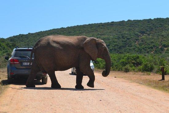 Parc national des Éléphants d'Addo : Addo