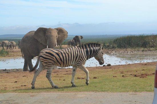 Parque nacional de los Elefantes de Addo: Addo