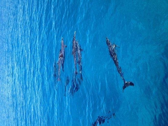 Bimini Big Game Club Resort & Marina: Dolphin trip