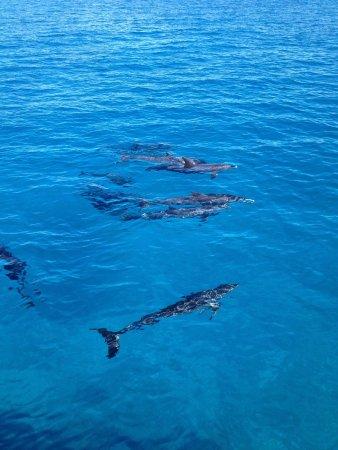 Bimini Big Game Club Resort & Marina : Dolphin trip