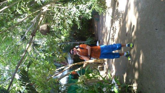 Junto al Rio Beachfront Bungalows and Suites: Bungalows dentro de un ambiente tropical