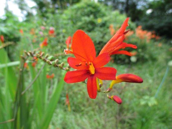 Ueno Farm: funky lily