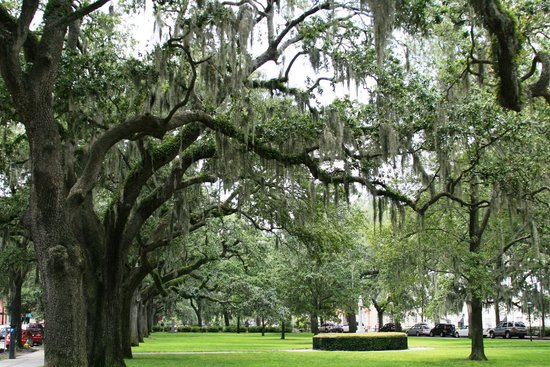 Savannah Historic District : Tree lined parkway in historic district