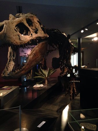 The Great North Museum: Dinosaur
