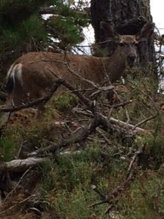 Point Lobos State Reserve: wildlife