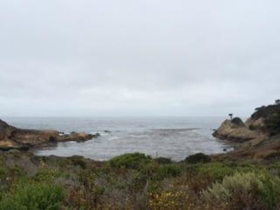 Point Lobos State Reserve: gray, but still lovely.
