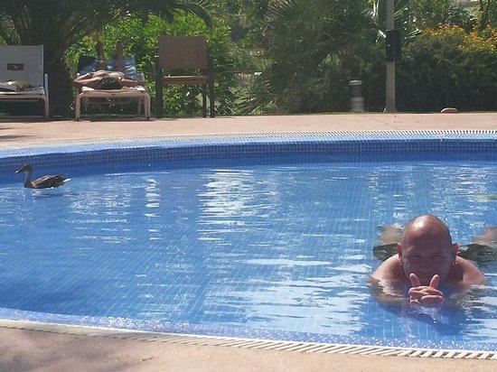 Hotel Alicante Golf : DUCKS IN THE POOLS???? YUK