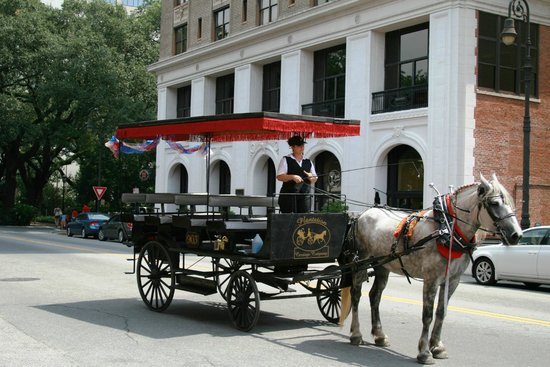 Savannah Historic District : Horse drawn carriage in Savannah's historic district