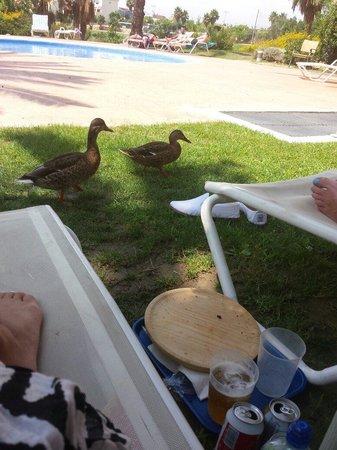 Hotel Alicante Golf : Go away ducks!!!