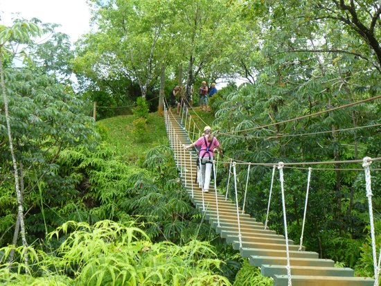 Princeville Ranch : Suspension bridge - you are latched on - can't fall!