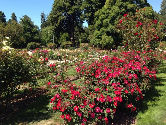 Point Defiance Park: Rose Garden
