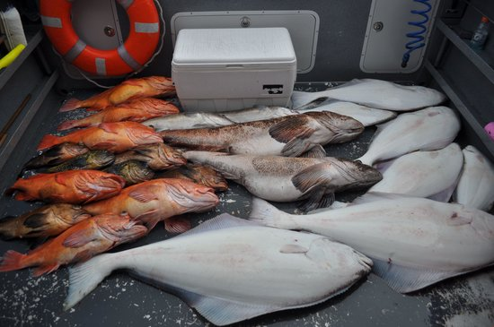 Saltwater Excursions - Fishing Charters and Heli Tours: All in a day's catch