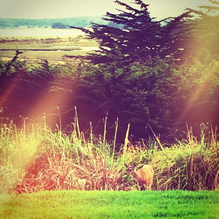 Bodega Bay Lodge: Our View with a friendly deer to greet us!