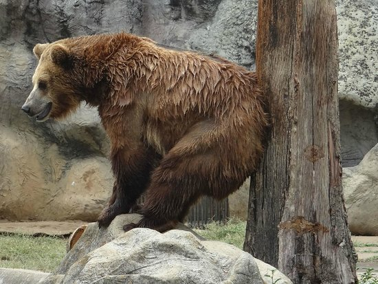 La Aurora Zoo: One of the bears scratching an itch....