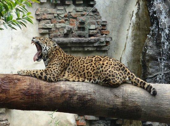 La Aurora Zoo: Ready for my nap.