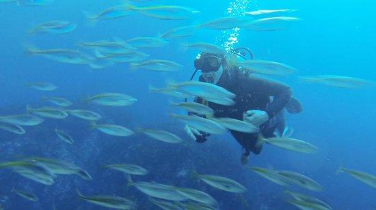 Dive Tutukaka: Poor Knights Island