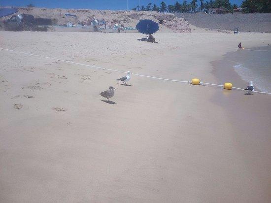 Playa Palmilla (Palmilla Beach): Hermosa y limpia