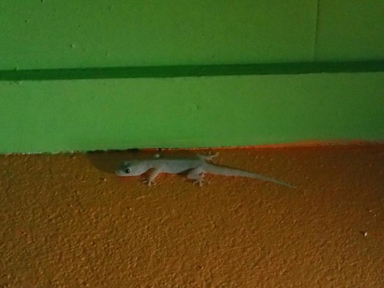 Tipple Tree Beya: House Gecko