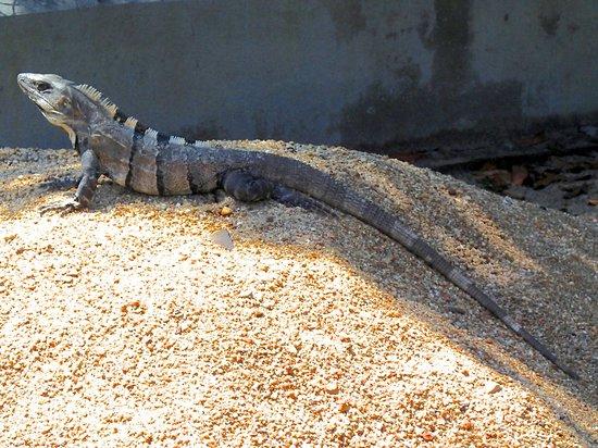 Tipple Tree Beya: Cstenosaur