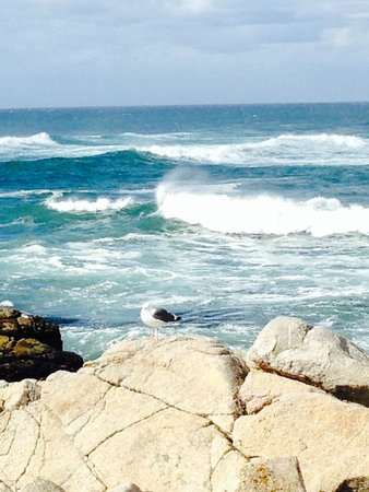 17-Mile Drive: Pebble Beach- Seagull with Pacific in the background :)