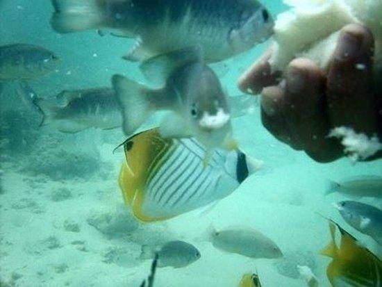 Castaway Resort: amazing fish