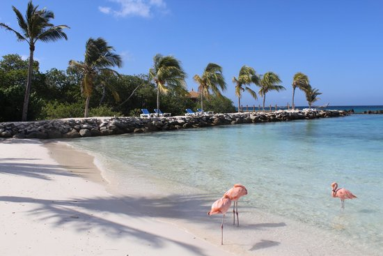 Renaissance Aruba Resort & Casino: Renaissance Beach - Adult Exclusive