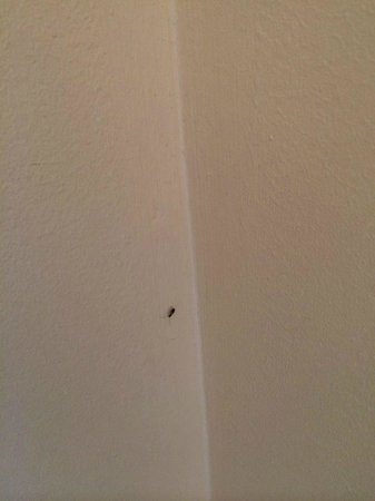 Holiday Inn Hotel & Suites Clearwater Beach: baby roach on wall