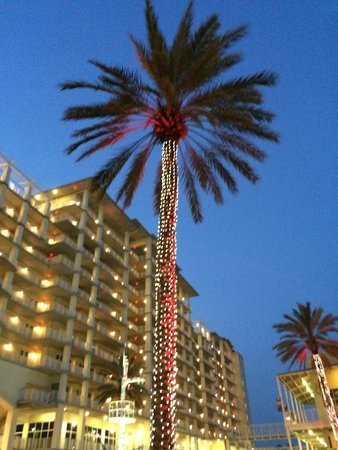 Villaggio Grille: palm tree lights in the outside dining area before the show
