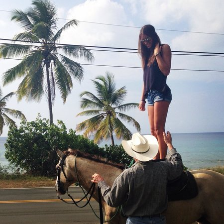 Equus Rides: Pirate took me to where the summer breeze meets the palm trees��