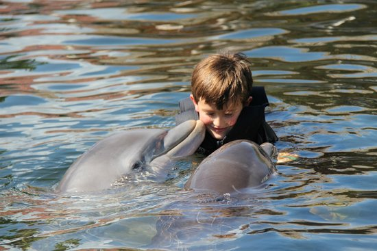 Dolphins Plus - Key Largo: A little dolphins love..........