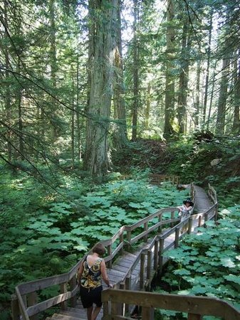 Giant Cedars Boardwalk Trail: Boardwalk